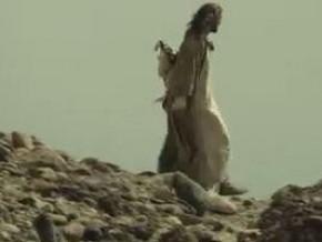 """Британската премиера на сериала """"Библията"""" мина при голям успех"""